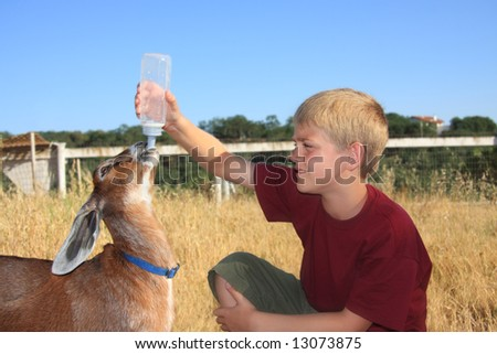 young boy feeding a baby nubian goat with a bottle. - stock photo