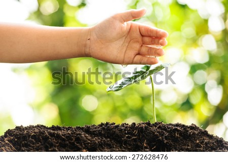 Young boy hand watering on green plant growing on soil