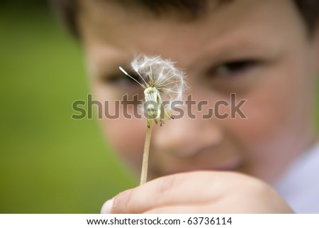 Young boy holding a dandelion - stock photo