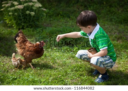 Young boy is feeding chickens in the yard