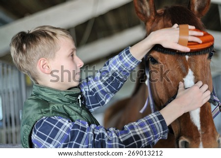 Young boy is grooming the horse - stock photo