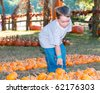 Young boy picks pumpkin at farm. - stock photo