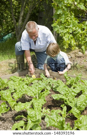 Young boy with grandfather gardening in community garden - stock photo