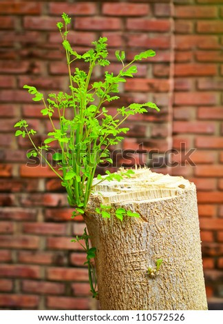 Young branch on the old tree stump with grungy brick wall - stock photo