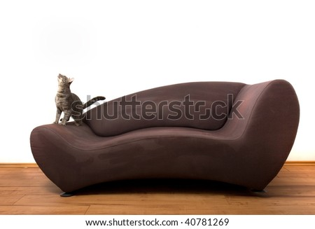 young brindle cat playing on sofa, part 2 - stock photo