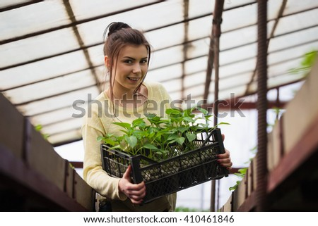 Young brunette farmer woman holds a box of fresh green seedlings plants in greenhouse with happy smile. She is satisfied of how her vegetable harvest grown in cultivated land under sun in hothouse.  - stock photo