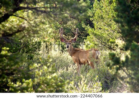 Young buck deer stands in a forest clearing. - stock photo