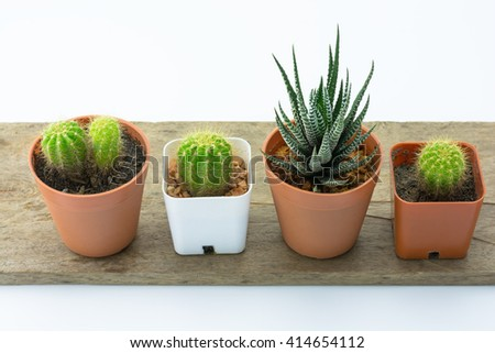 Young Cactus and Haworthia Fasciata , succulent plant on white background