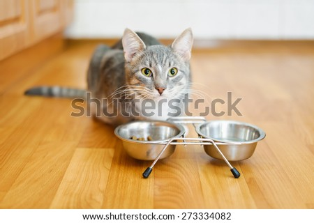young cat after eating food from a plate - stock photo