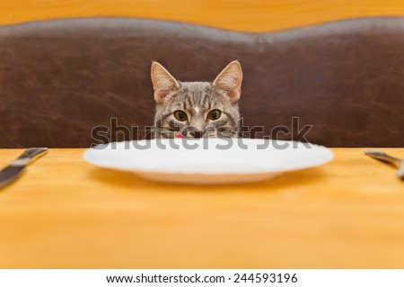 young cat after eating food from kitchen plate. Focus on a cat - stock photo