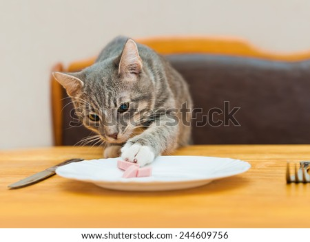young cat eating food from kitchen plate. focus on cat - stock photo