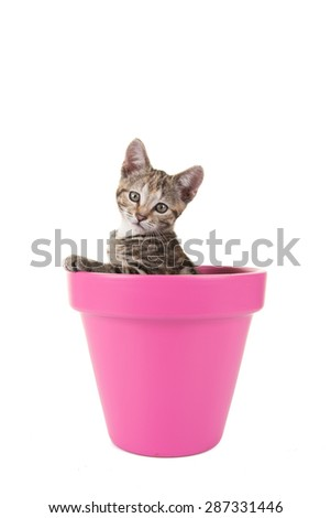Young cat in a pink flower pot at a white background