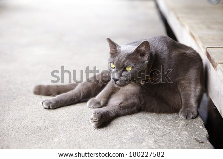 young cat in sun light