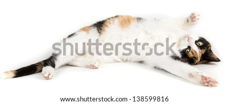 Young cat lying on the ground, isolated in white looking to the camera - stock photo