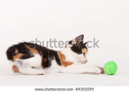 Young cat playing with ball isolated on white - stock photo