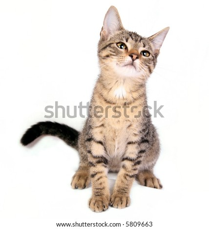Young cat sitting on white background 3 - stock photo