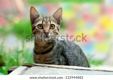 Young cat sitting outdoors - stock photo