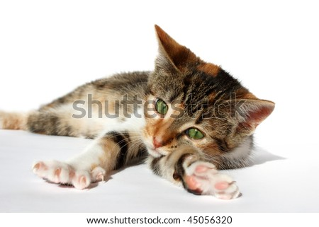 young cat stretching her legs and feeling comfortable - stock photo
