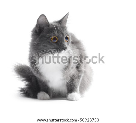 Young cat with big eyes isolated on white - stock photo