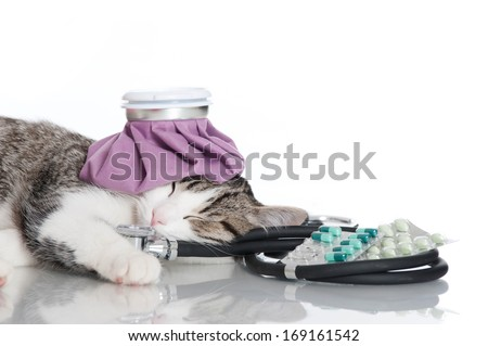Young cat with emergency kit - stock photo