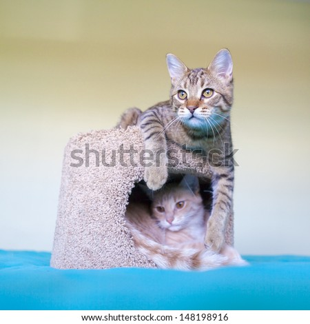 Young Cats - stock photo