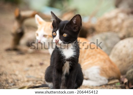 Young cats in nature - stock photo