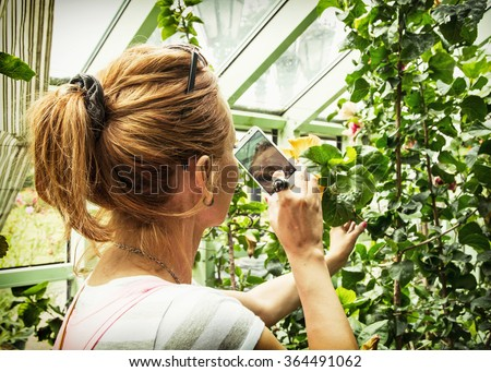 Young caucasian woman takes photo with smartphone of hibiscus in orangery. Gardening theme. - stock photo