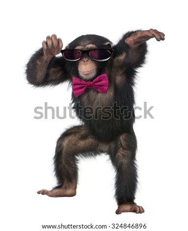 Young Chimpanzee wearing glasses and a bow tie, dancing in front of a white background - stock photo