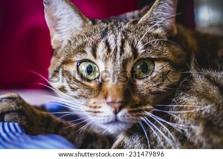 young common cat with soft skin - stock photo