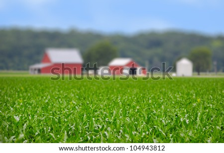 Young corn field with barn on a spring morning very shallow depth of field - stock photo