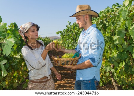 Young couple, vine growers, walk through grape vines picking and eating grapes. - stock photo