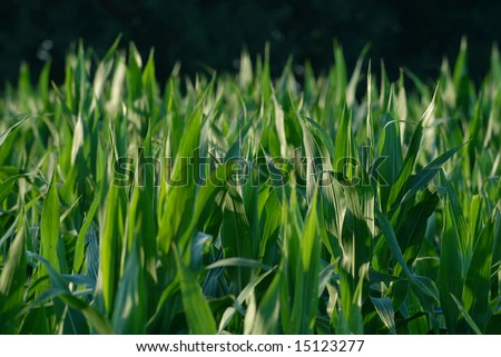 Young crop plants - stock photo