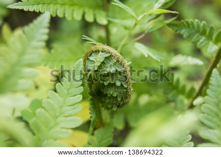 young curly fern on blurred green background