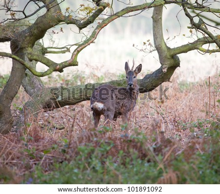 Young deer in a wood - stock photo
