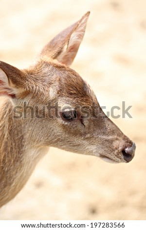Young deer in the farm for wild animals background.