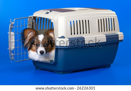 Young dog papillon and a plastic carrier - stock photo