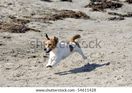 young dog playing at the beach - stock photo