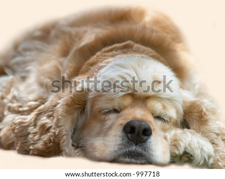 young dog sleeping - stock photo