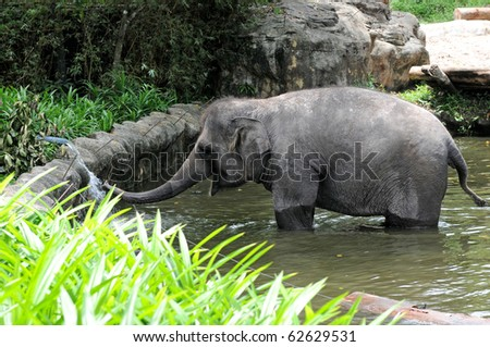 young Elephant at a waterhole - stock photo