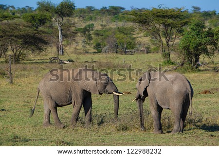 Young elephants in Masai Mara National Park, Kenya - stock photo