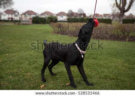 Young family pet dog playing and being treated