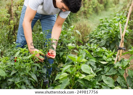 Young farmer checking the vegetables. - stock photo