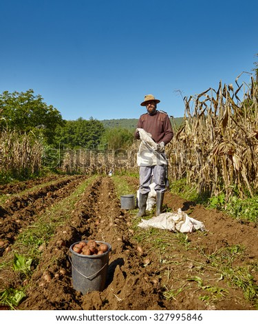 Young farmer harvesting potatoes at countryside - stock photo