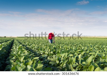 Young farmer in soybean fields  - stock photo