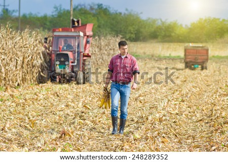Young farmer walking on corn field with corncobs in hands during harvest - stock photo