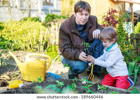 Young father and his little adorable son planting seeds and seedlings in vegetable garden, outdoors