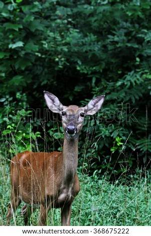 Young female doe standing in weeds with extreme shallow depth of field. - stock photo