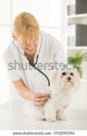 Young female veterinary examining a maltese dog at the doctor's office