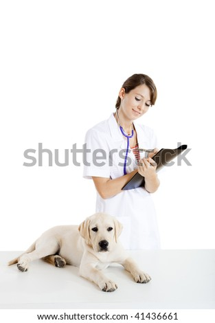 Young female veterinary taking care of a beautiful labrador dog - stock photo