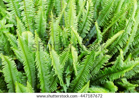 young fern leaf. nature background   - stock photo